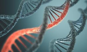 ¿El-comportamiento-es-genetico