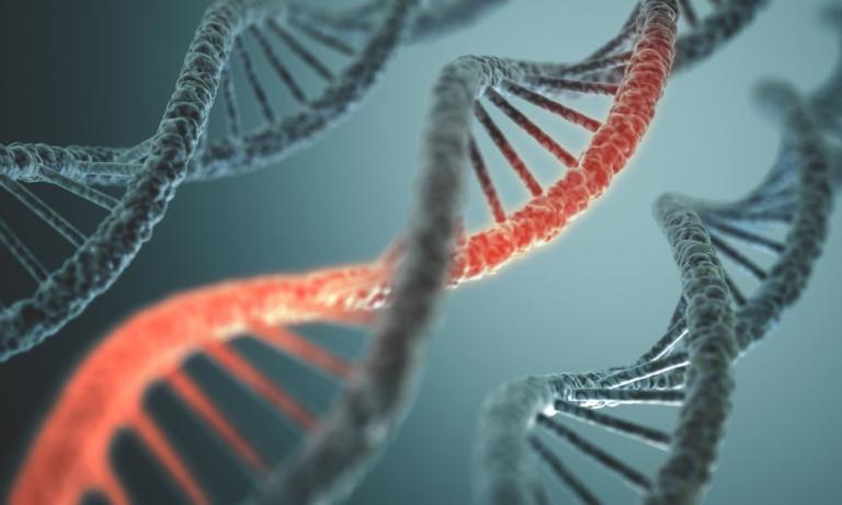 Lee más sobre el artículo ¿El comportamiento es genético?